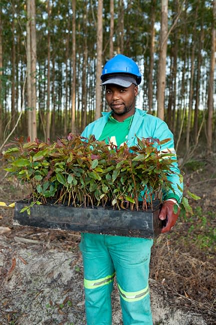 """Forestry, pulp and paper sector companies are well-positioned to lead the way to a low carbon economy, making use of the """"ultimate renewable"""" to address both climate change and stop the free fall in job losses. (Image credit: Mondi)"""